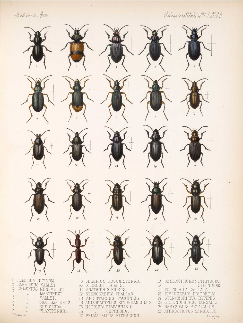 Beetles,  Image number:bca_12_01_01_335