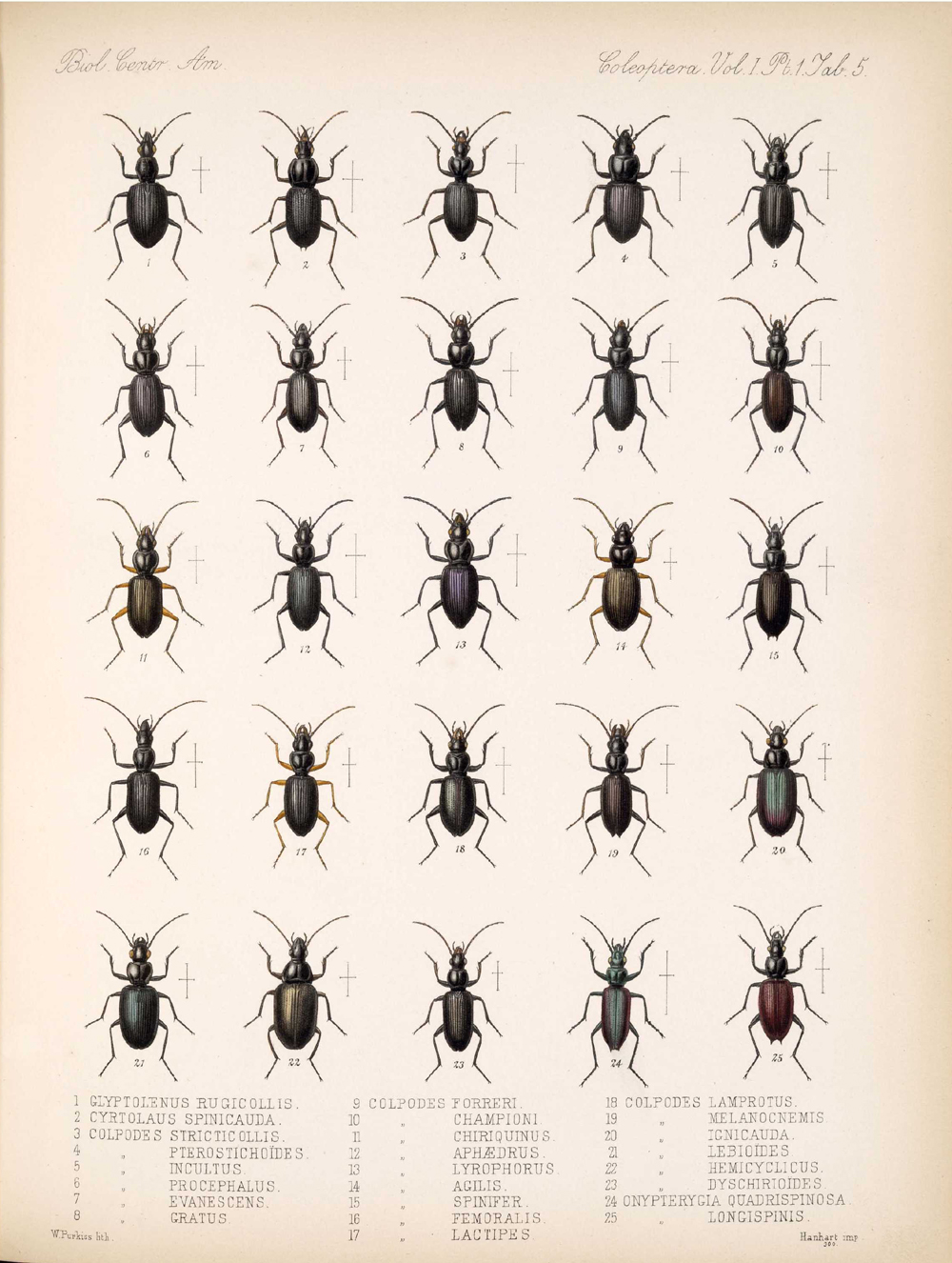 Beetles,  Image number:bca_12_01_01_337
