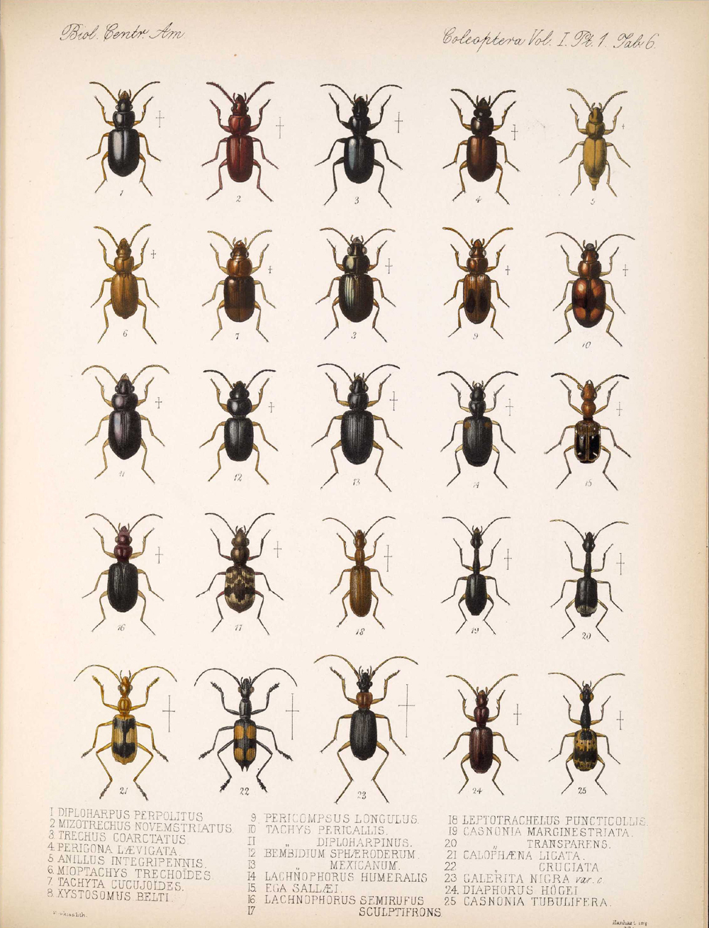 Beetles,  Image number:bca_12_01_01_338