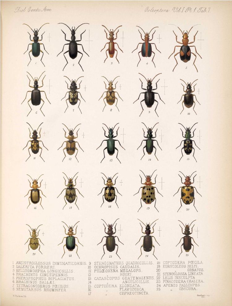 Beetles,  Image number:bca_12_01_01_339