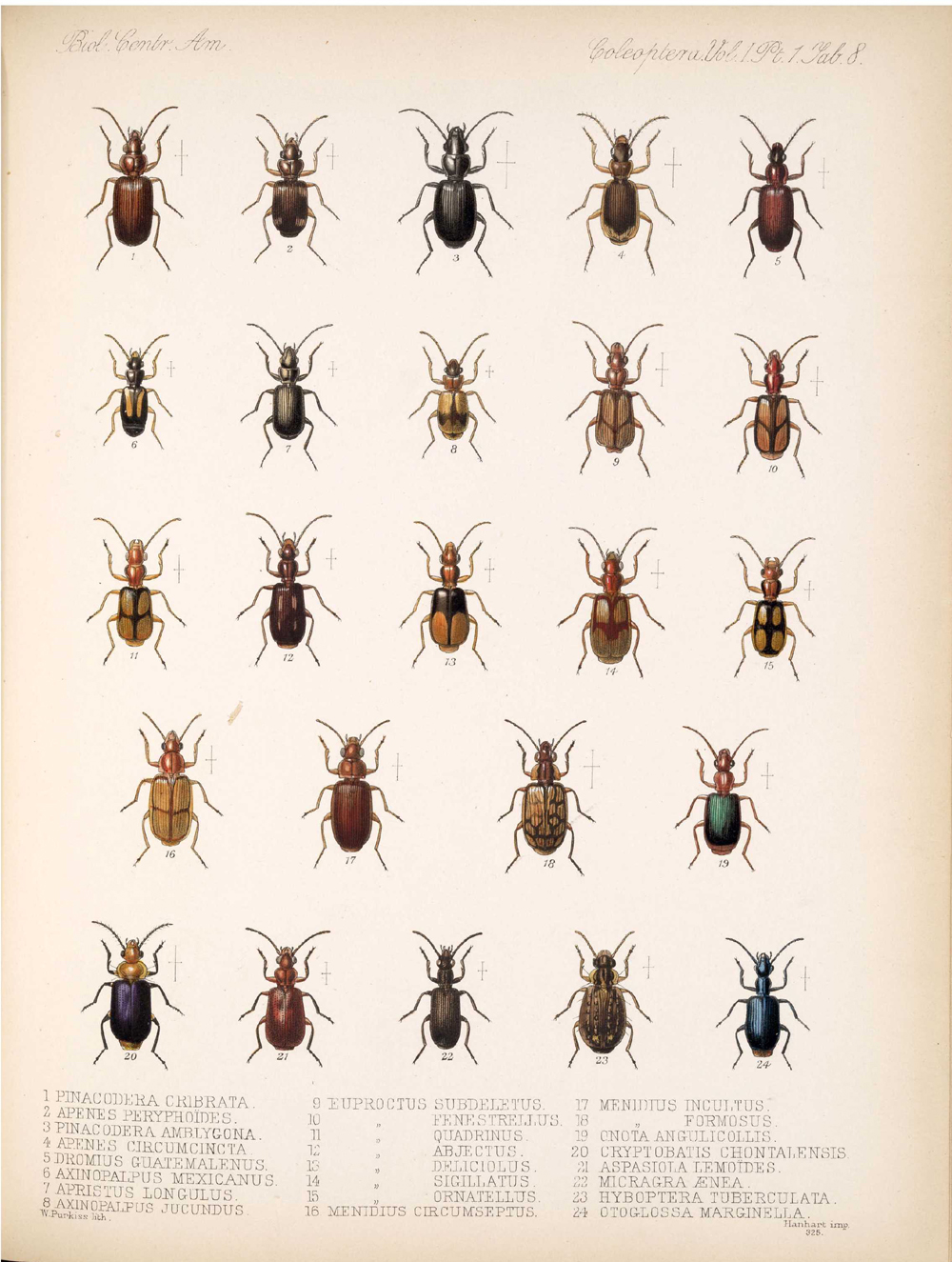 Beetles,  Image number:bca_12_01_01_340