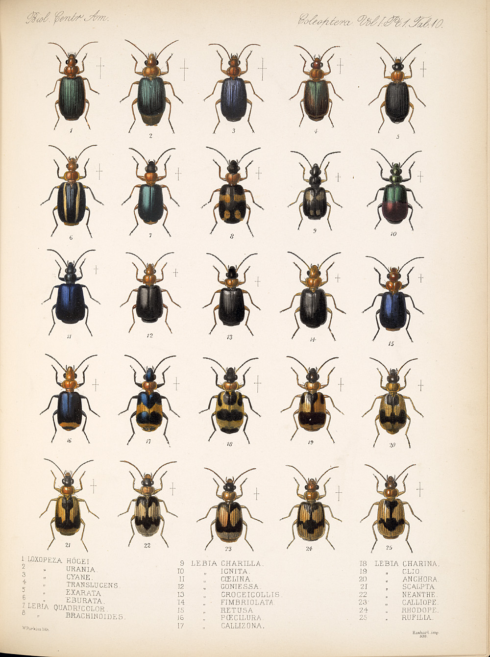 Beetles,  Image number:bca_12_01_01_342