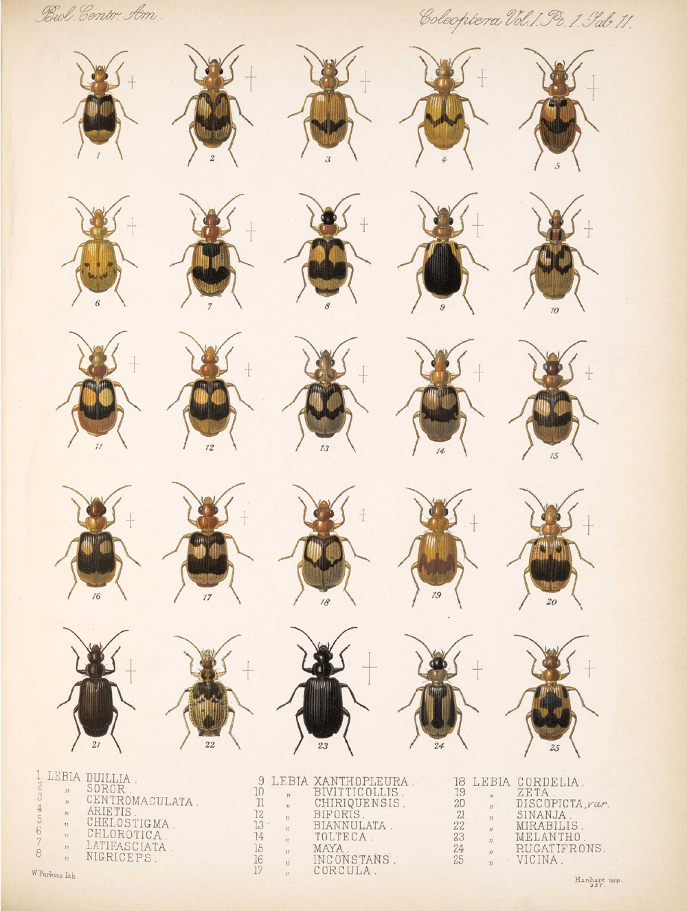 Beetles,  Image number:bca_12_01_01_343