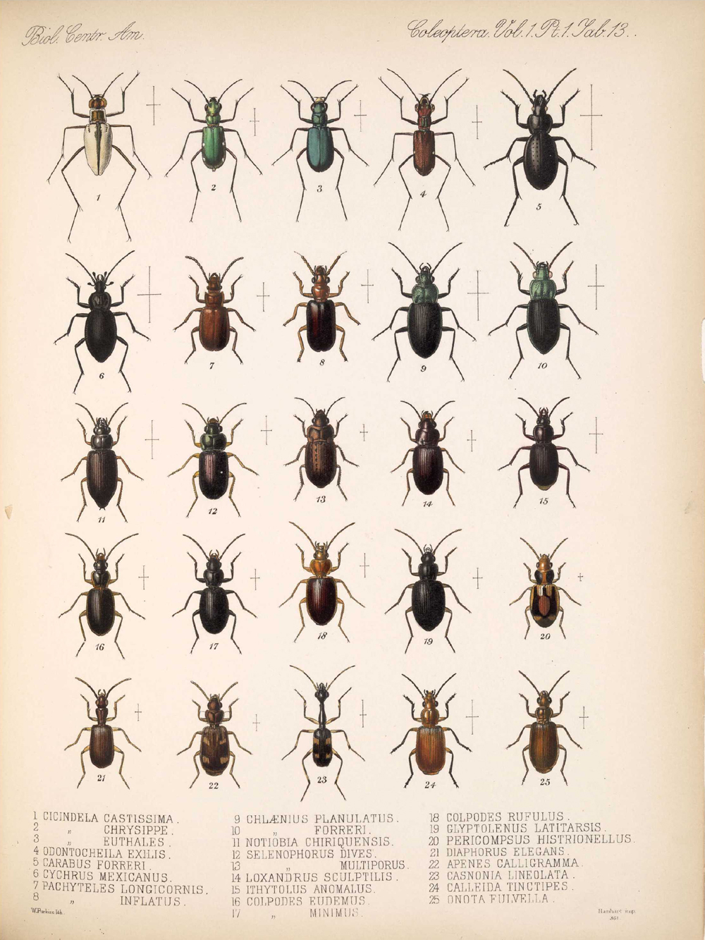 Beetles,  Image number:bca_12_01_01_345
