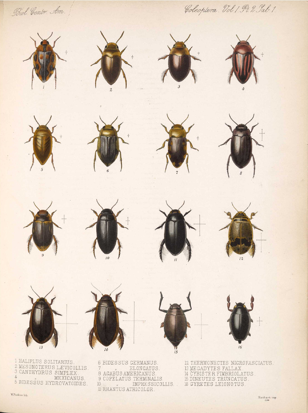 Beetles,  Image number:bca_12_01_02_847