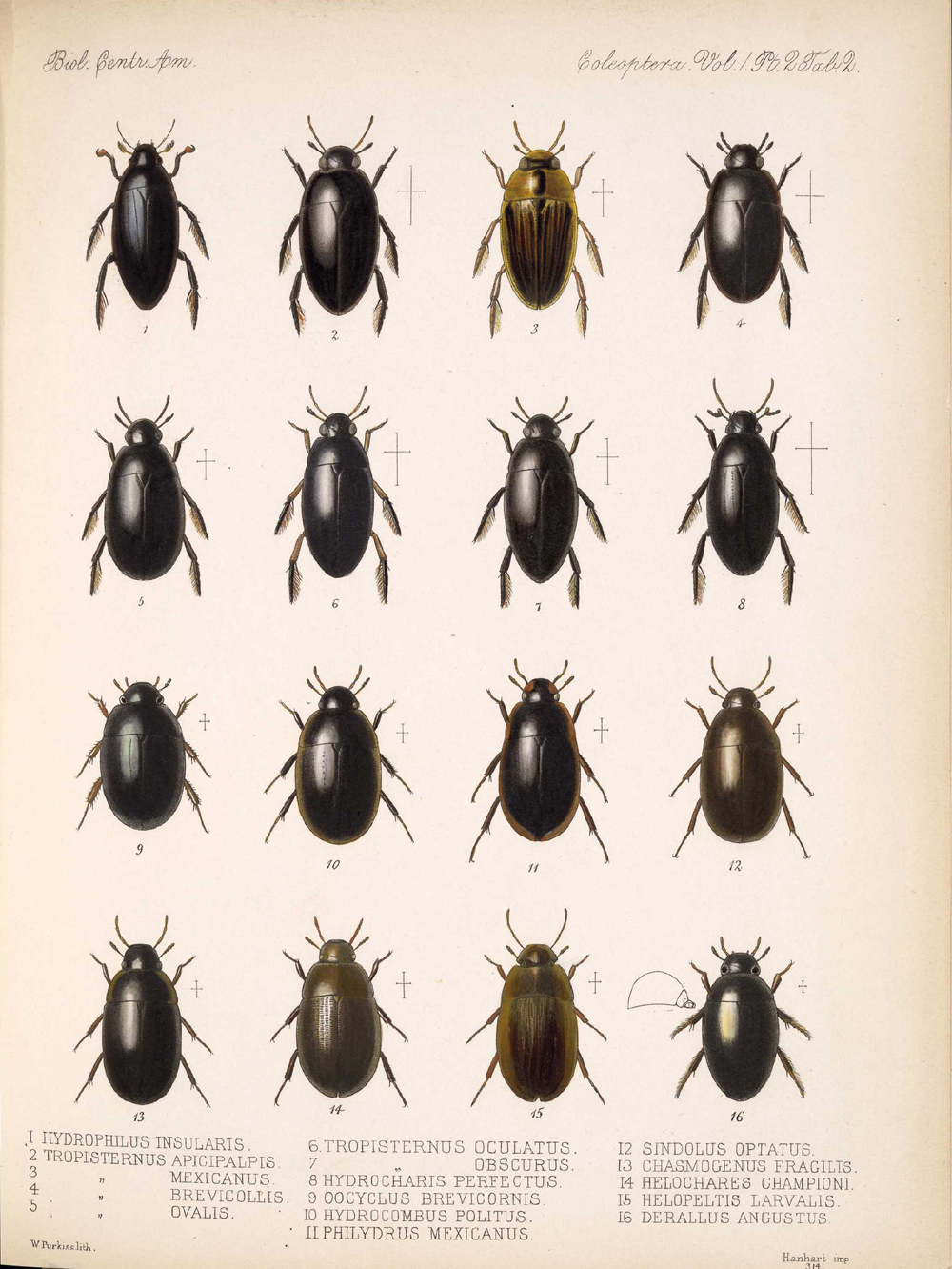 Beetles,  Image number:bca_12_01_02_848