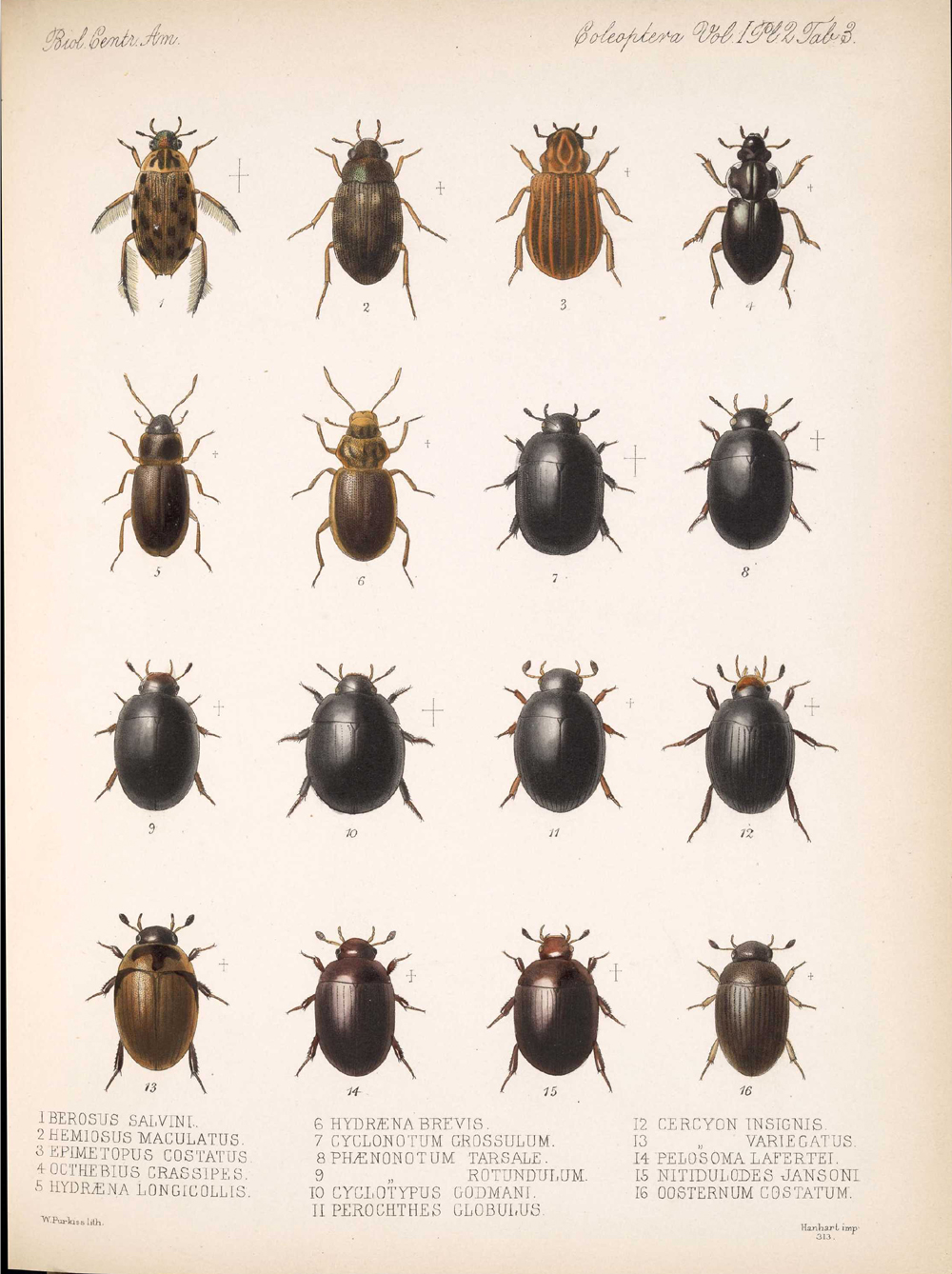 Beetles,  Image number:bca_12_01_02_849