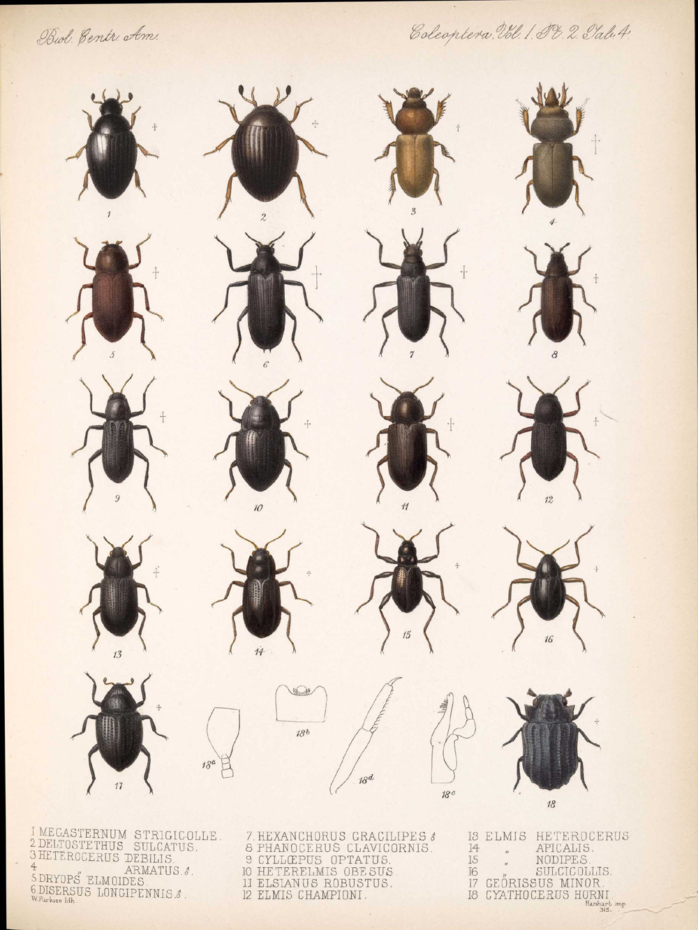 Beetles,  Image number:bca_12_01_02_850