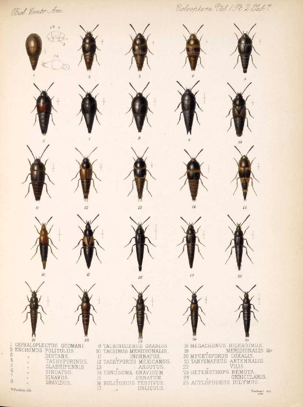 Beetles,  Image number:bca_12_01_02_853