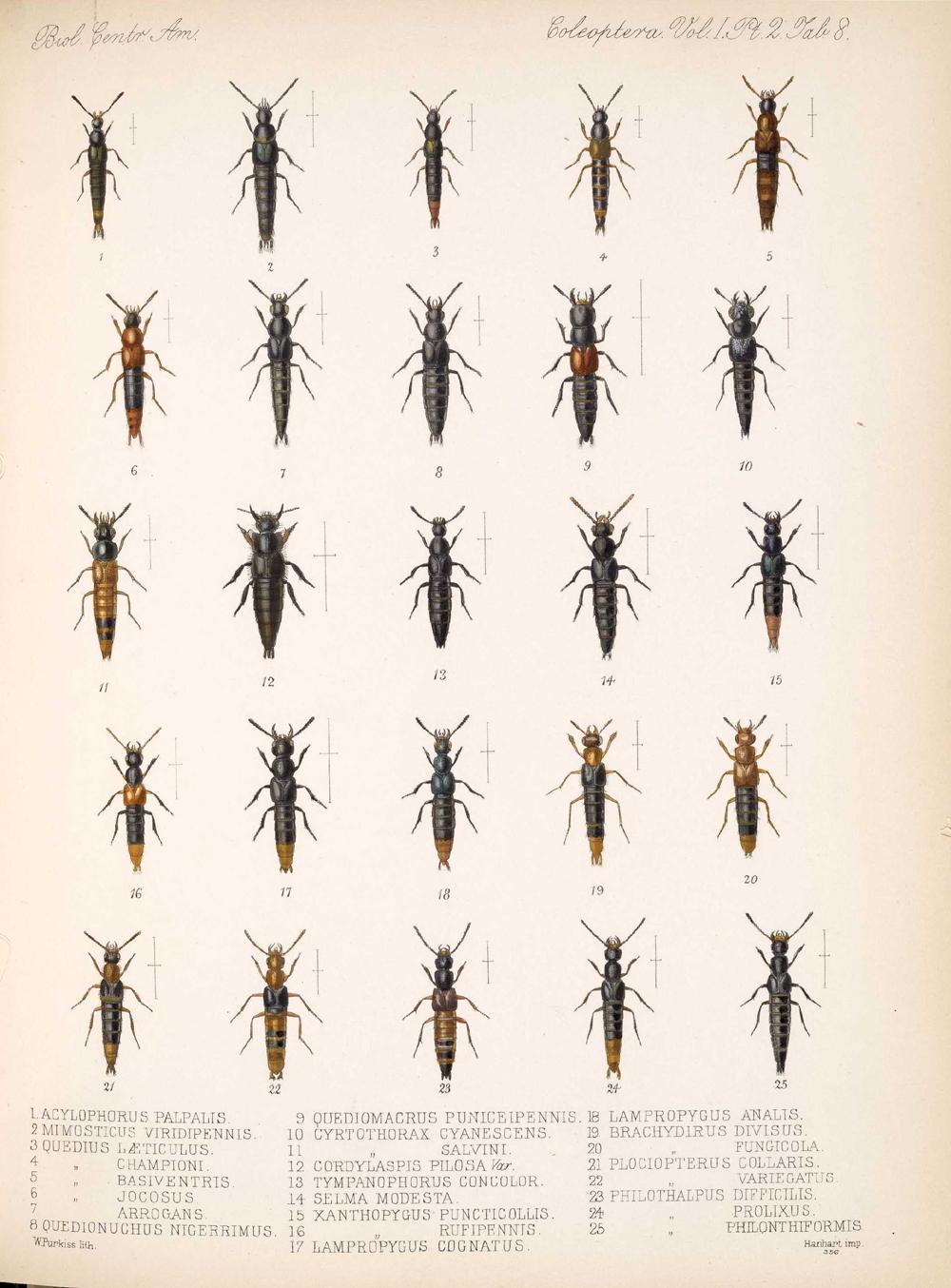 Beetles,  Image number:bca_12_01_02_854