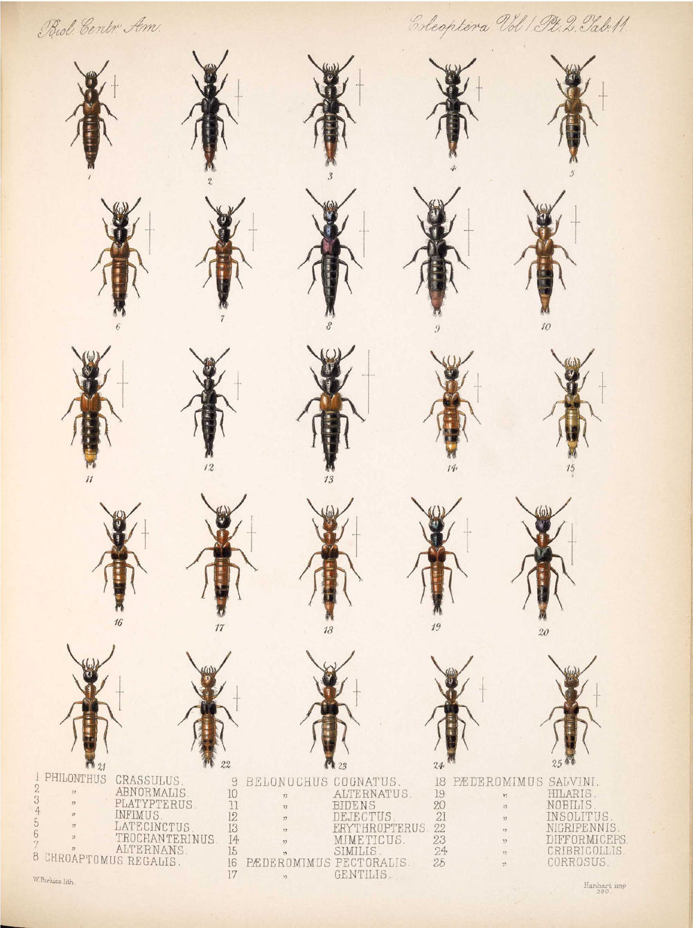 Beetles,  Image number:bca_12_01_02_857