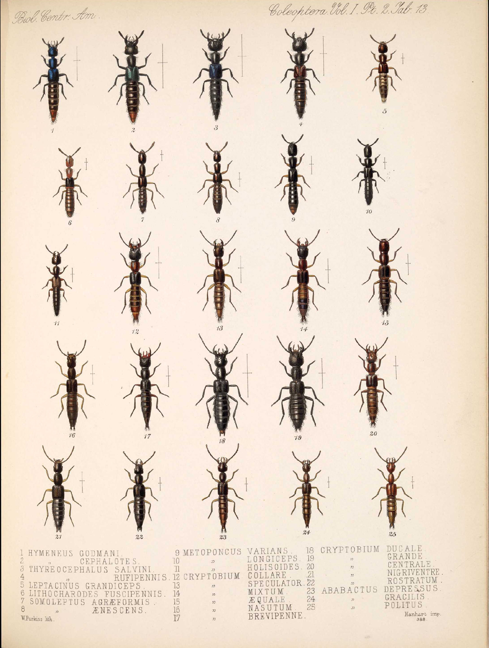 Beetles,  Image number:bca_12_01_02_859