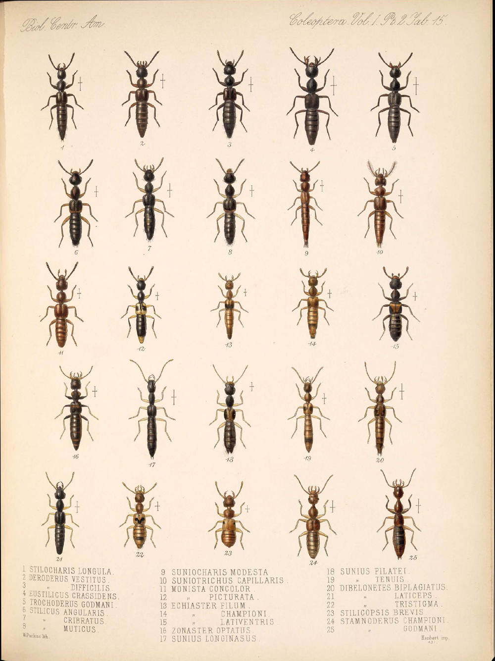 Beetles,  Image number:bca_12_01_02_861