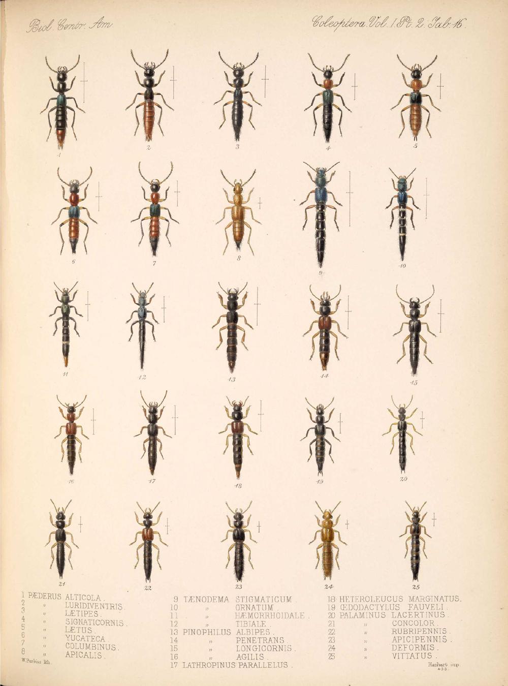 Beetles,  Image number:bca_12_01_02_862