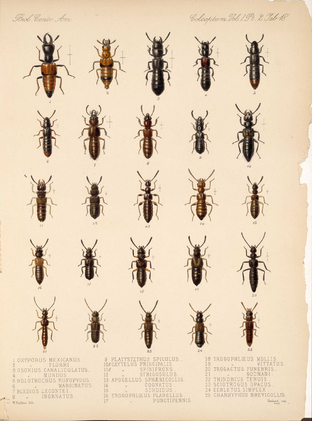 Beetles,  Image number:bca_12_01_02_864