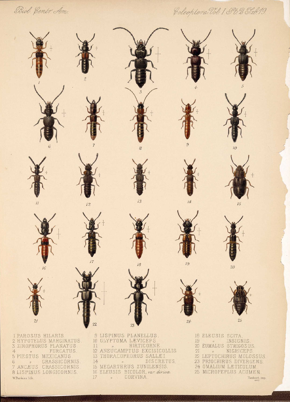 Beetles,  Image number:bca_12_01_02_865