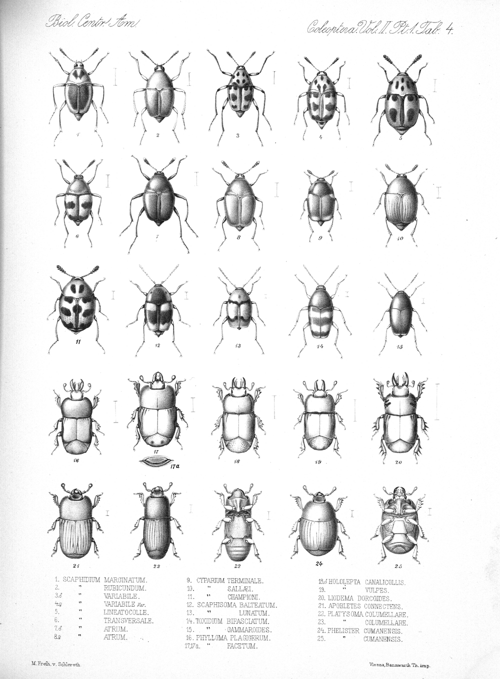 Beetles,  Image number:bca_12_02_01_738