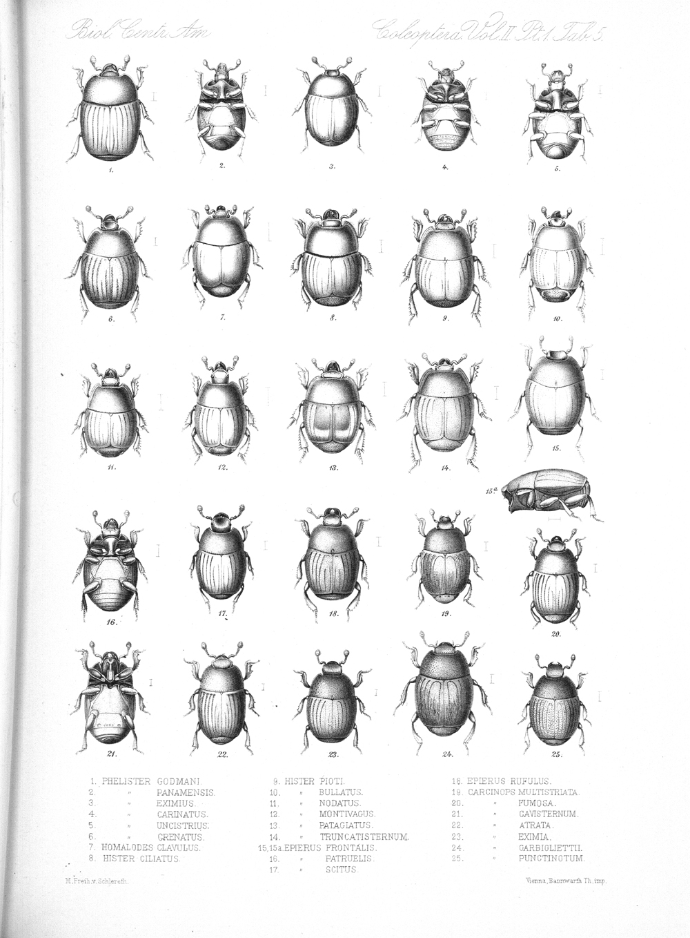 Beetles,  Image number:bca_12_02_01_739