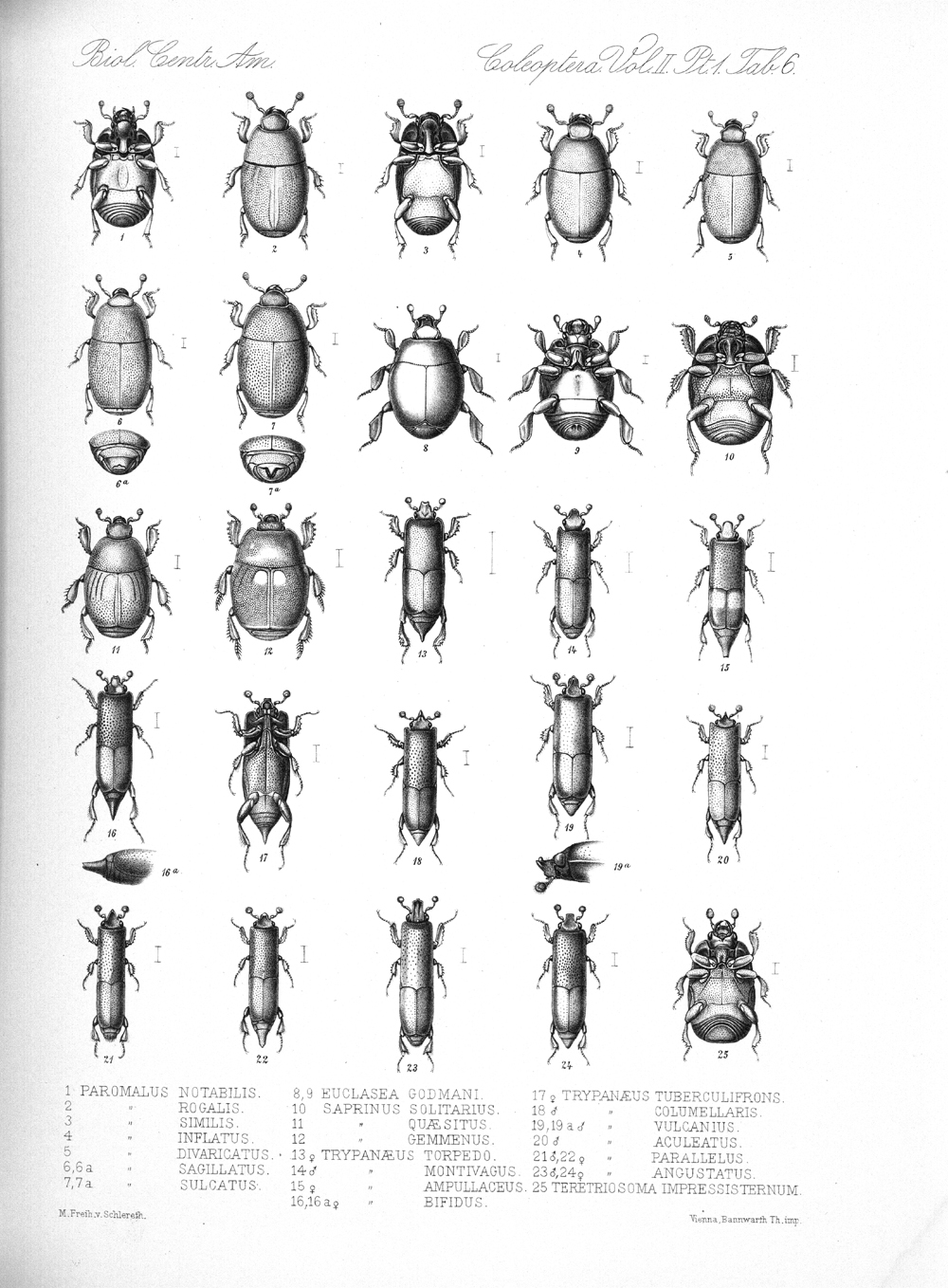 Beetles,  Image number:bca_12_02_01_740