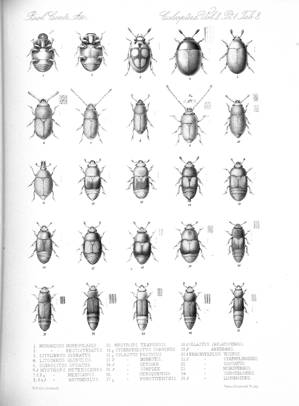 Beetles,  Image number:bca_12_02_01_742