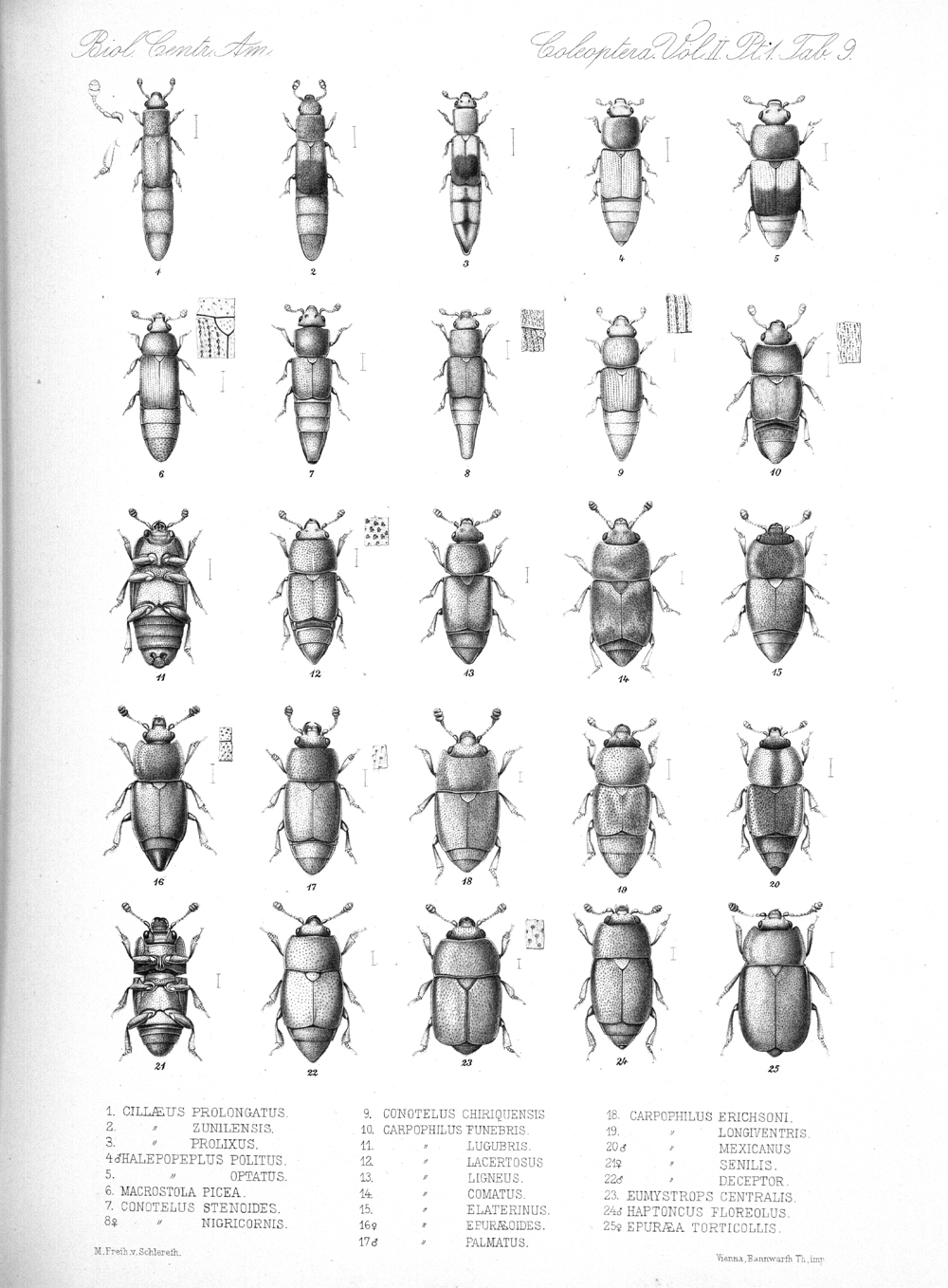 Beetles,  Image number:bca_12_02_01_743