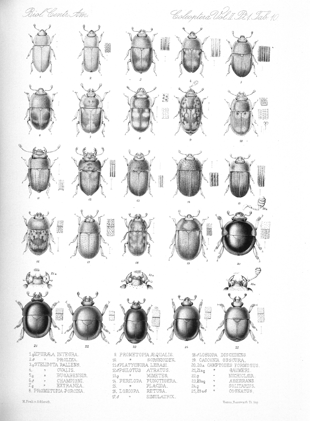 Beetles,  Image number:bca_12_02_01_744