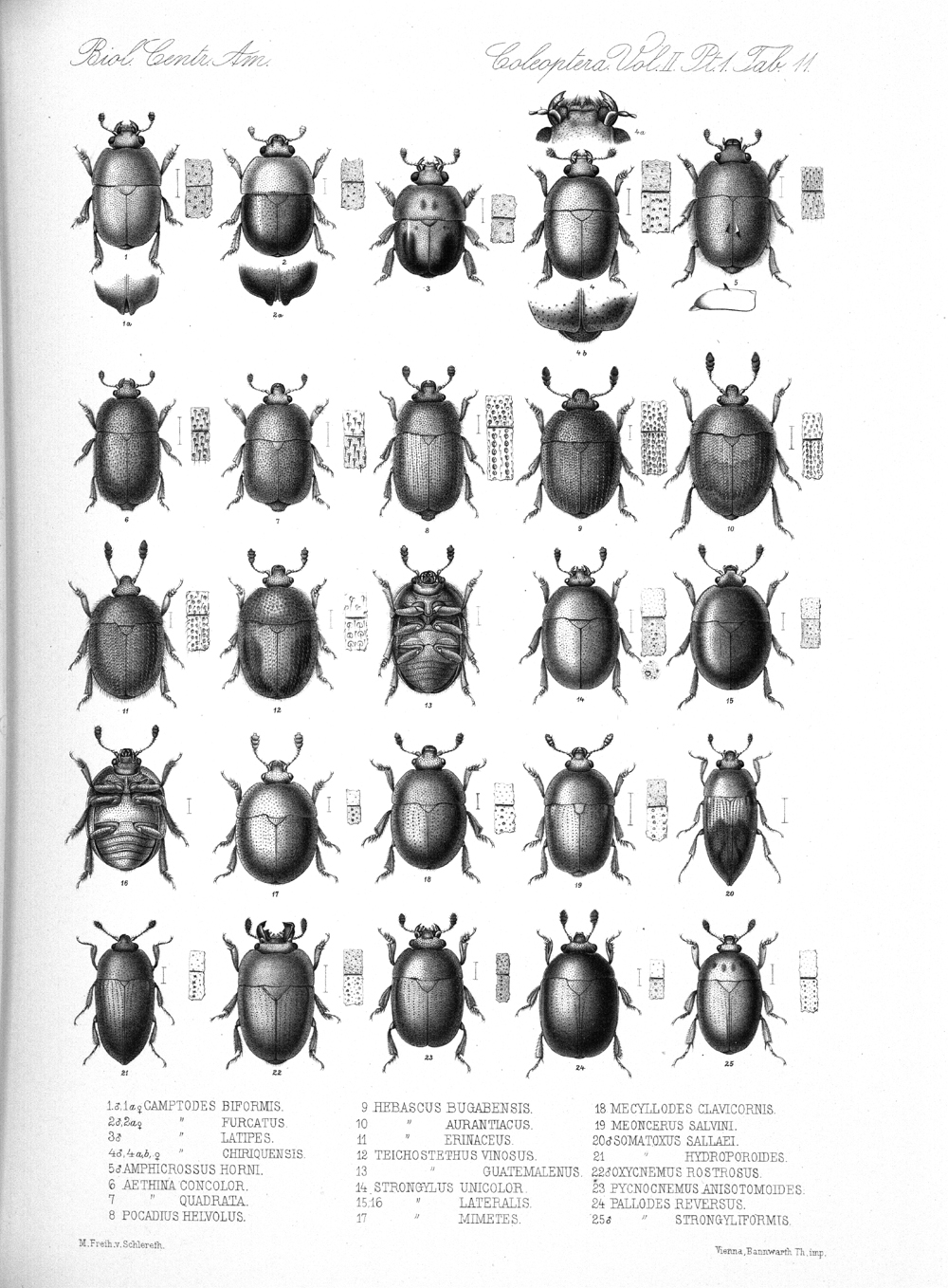 Beetles,  Image number:bca_12_02_01_745