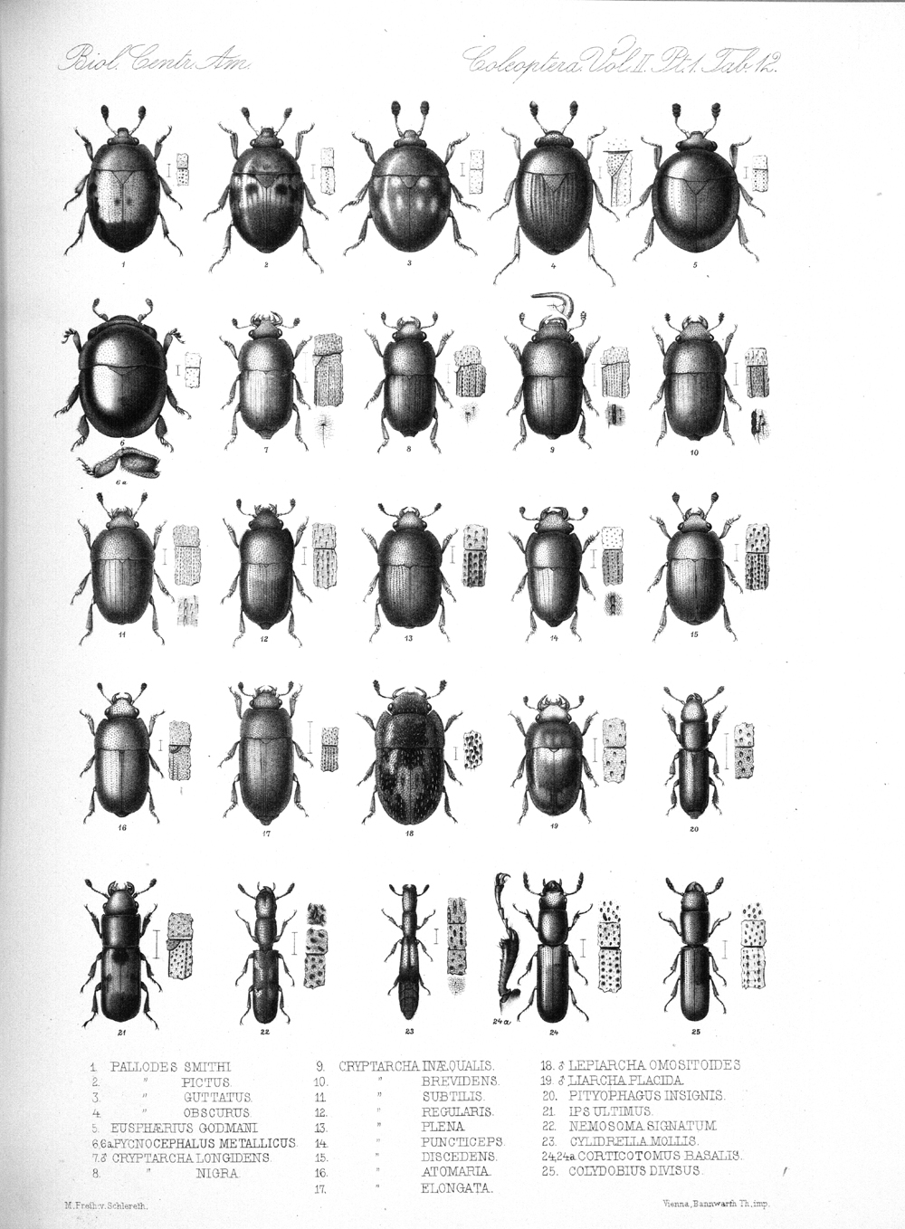 Beetles,  Image number:bca_12_02_01_746