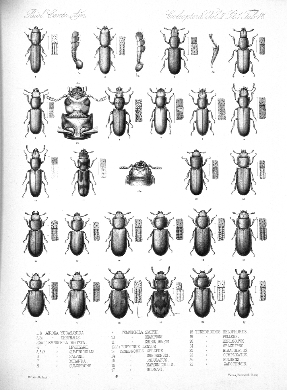 Beetles,  Image number:bca_12_02_01_747