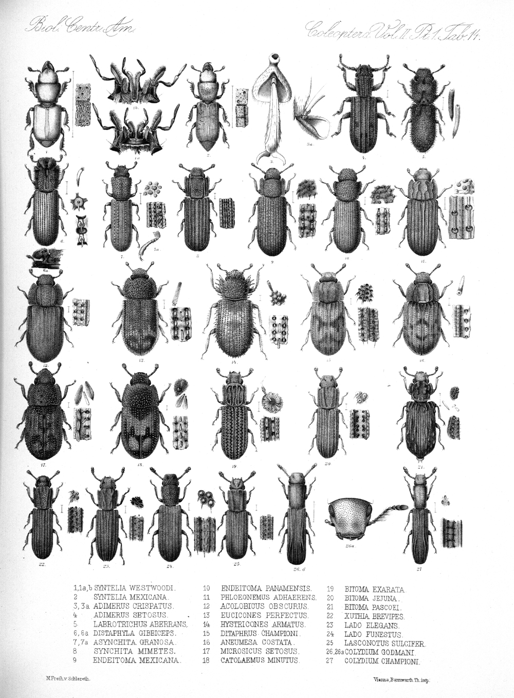 Beetles,  Image number:bca_12_02_01_748