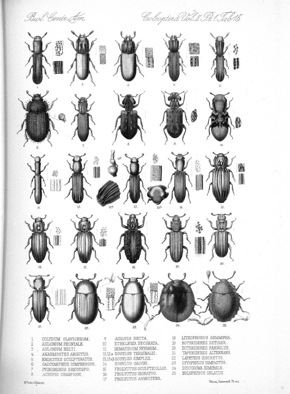Beetles,  Image number:bca_12_02_01_749
