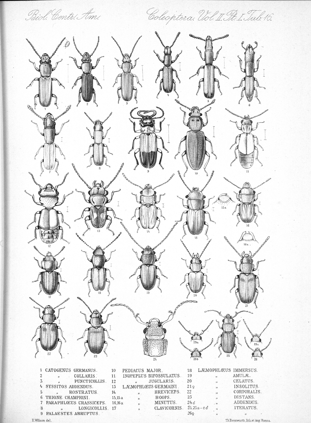 Beetles,  Image number:bca_12_02_01_750