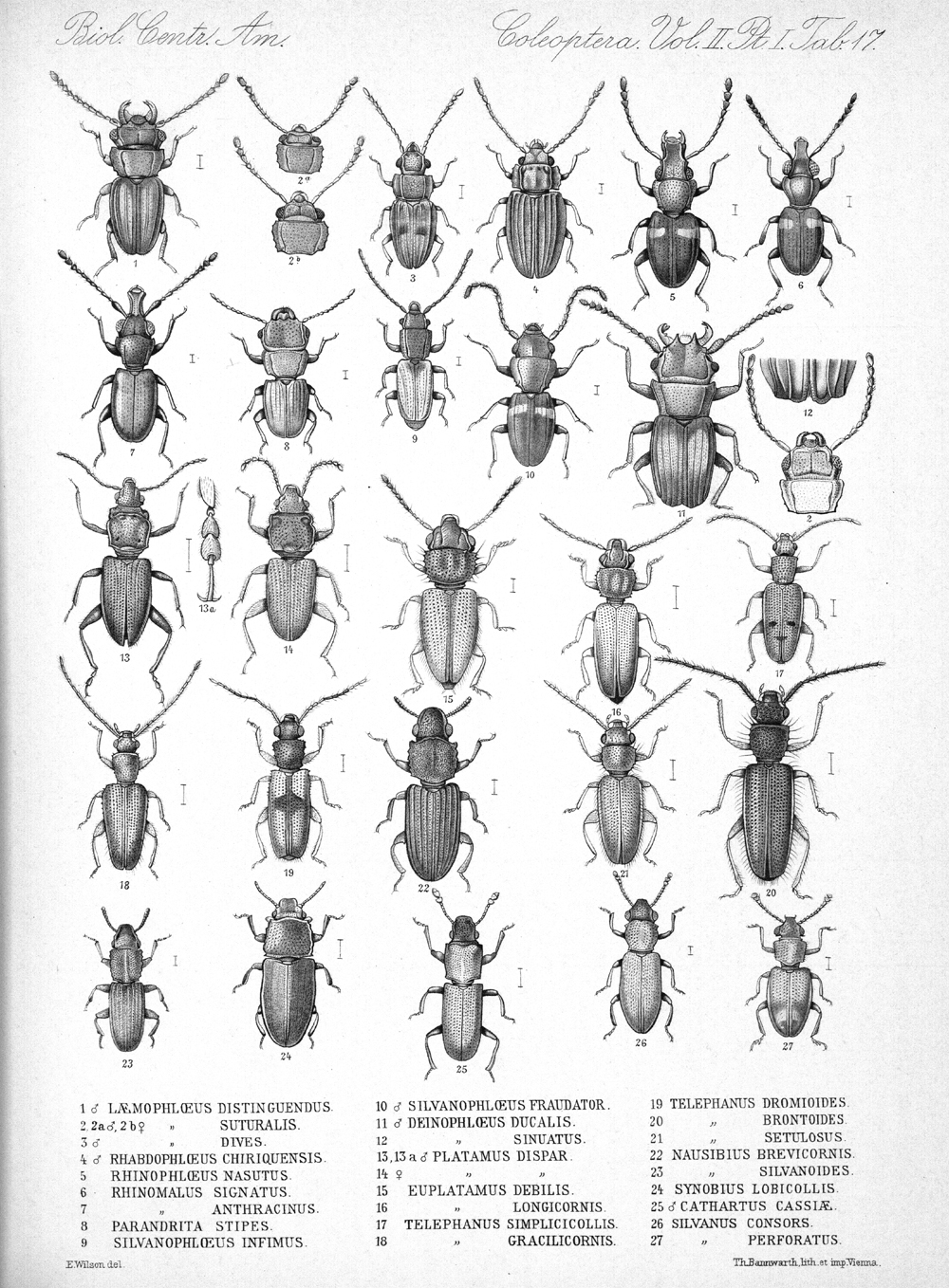 Beetles,  Image number:bca_12_02_01_751