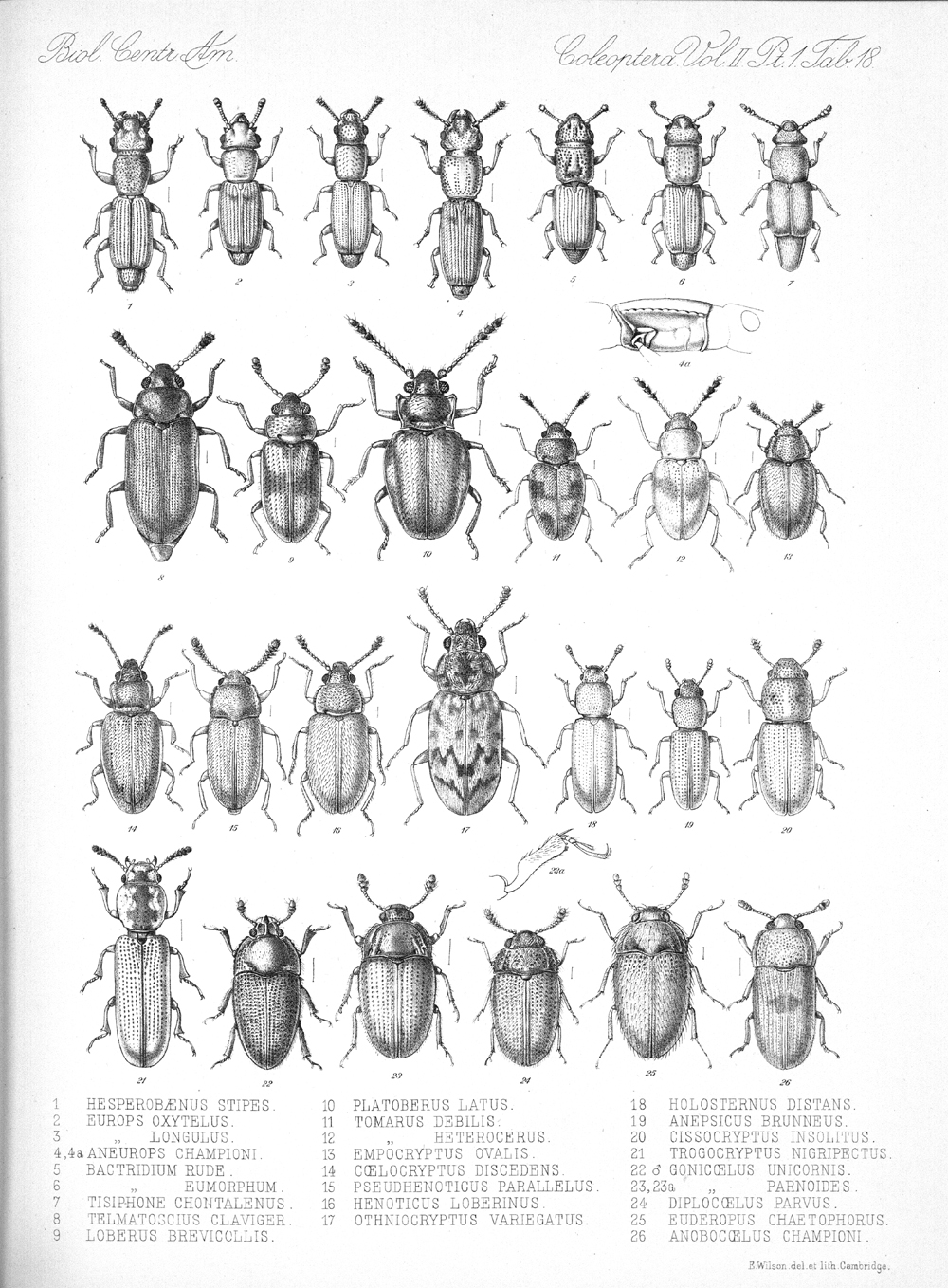 Beetles,  Image number:bca_12_02_01_752