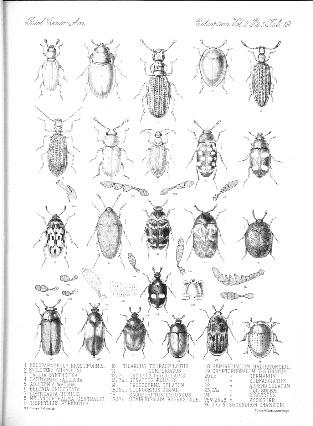 Beetles,  Image number:bca_12_02_01_753