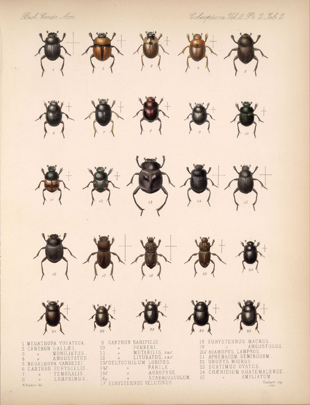 Beetles,  Image number:bca_12_02_02_452