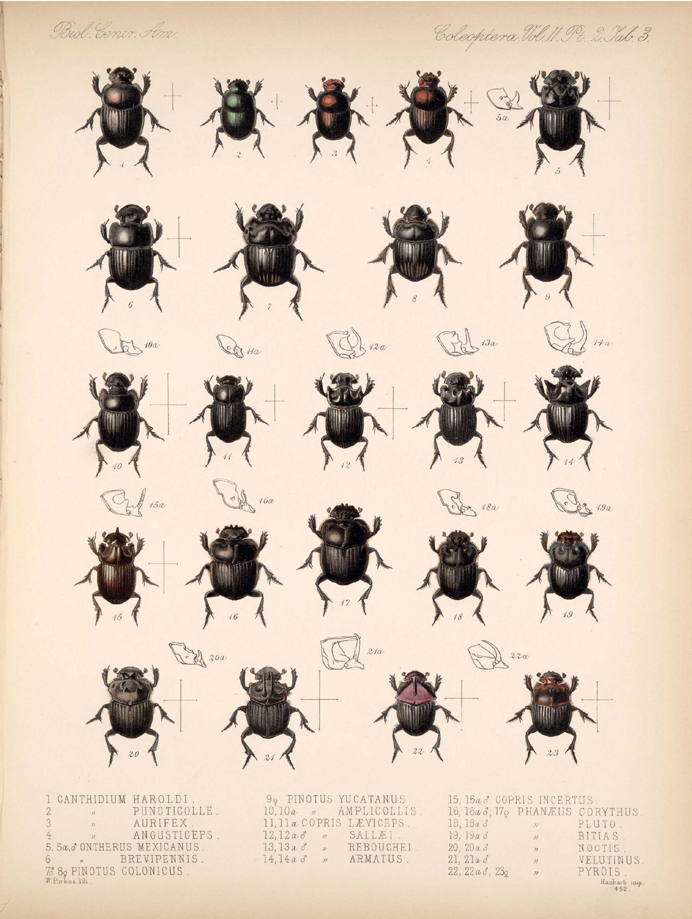 Beetles,  Image number:bca_12_02_02_453