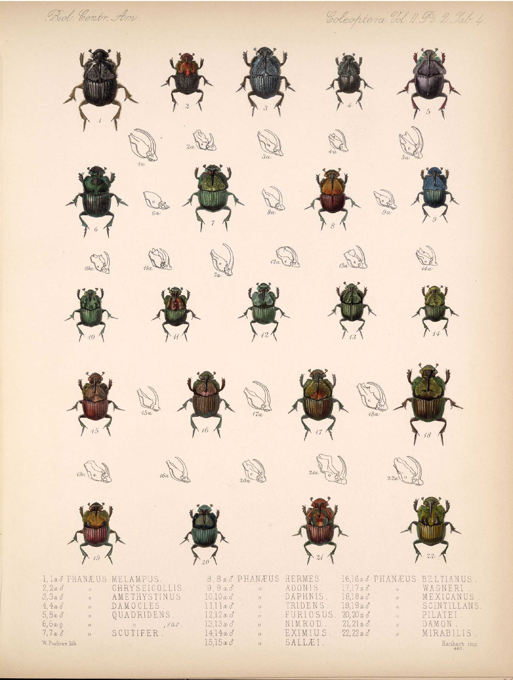 Beetles,  Image number:bca_12_02_02_454