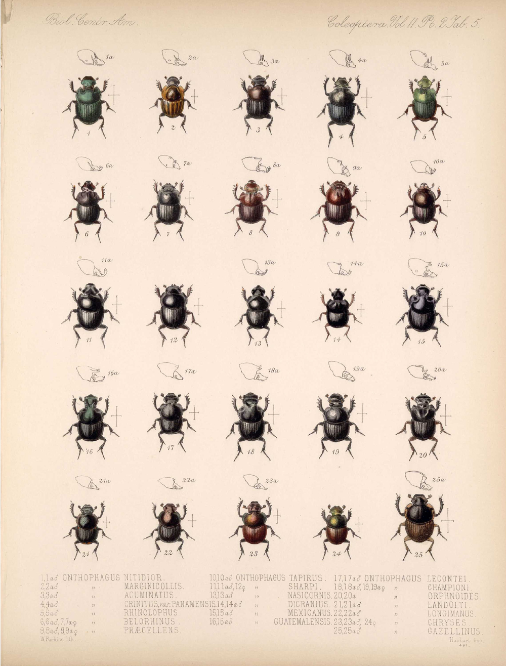 Beetles,  Image number:bca_12_02_02_455