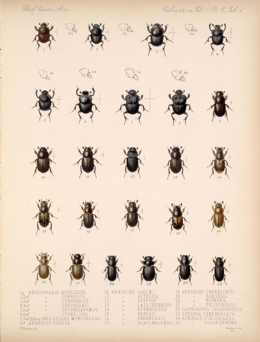 Beetles,  Image number:bca_12_02_02_456
