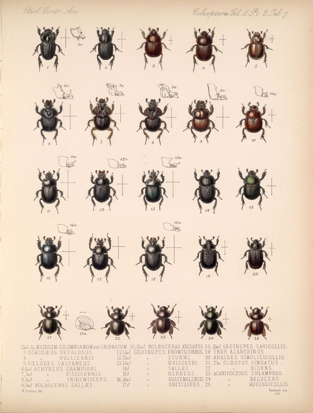 Beetles,  Image number:bca_12_02_02_457