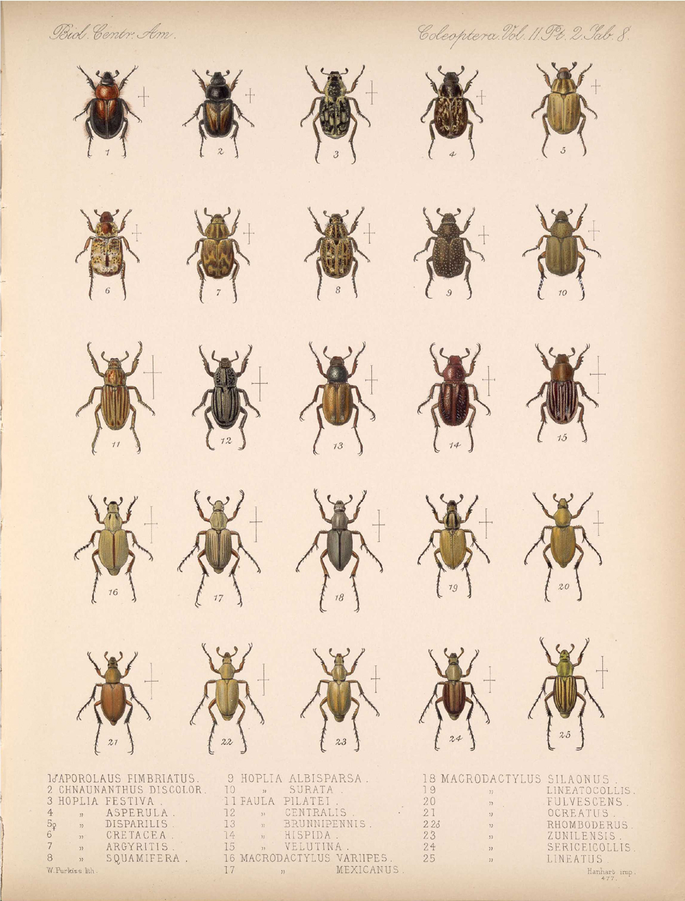 Beetles,  Image number:bca_12_02_02_458