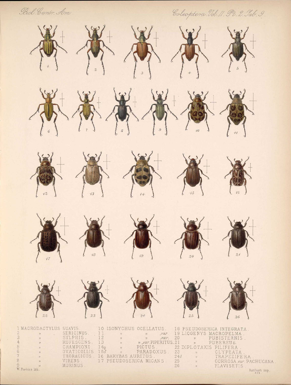 Beetles,  Image number:bca_12_02_02_459