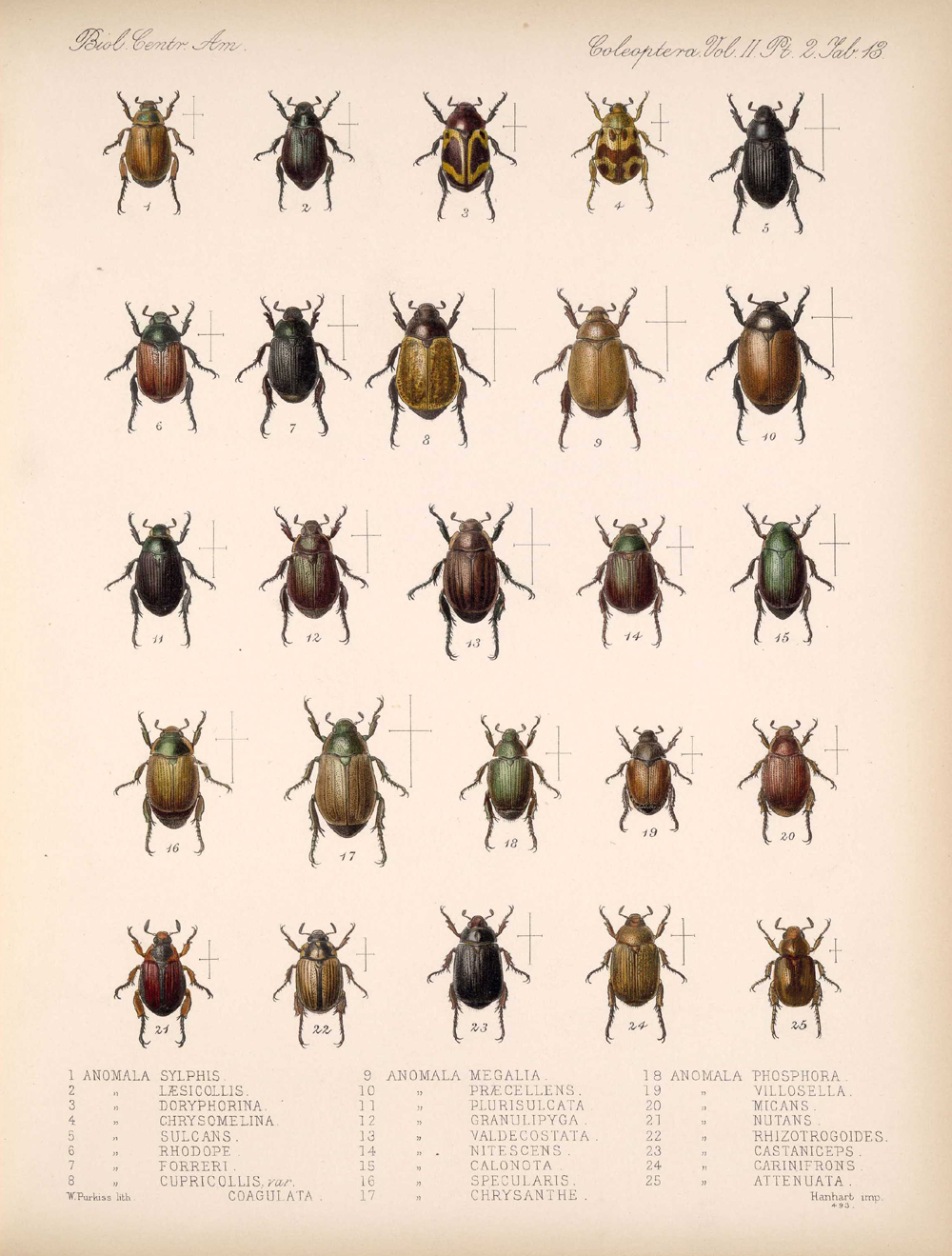 Beetles,  Image number:bca_12_02_02_463