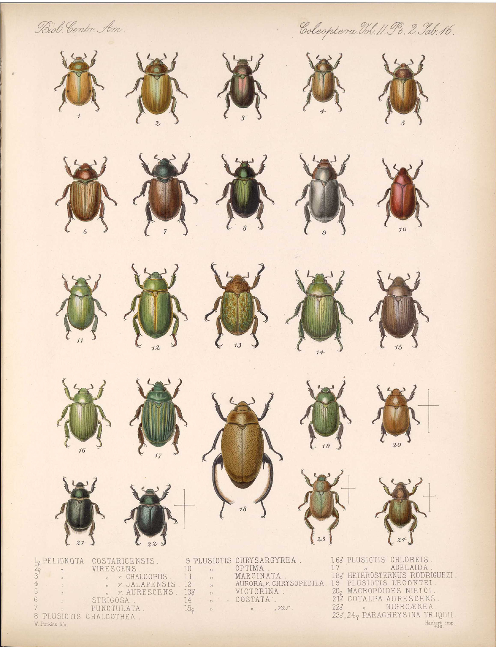 Beetles,  Image number:bca_12_02_02_466