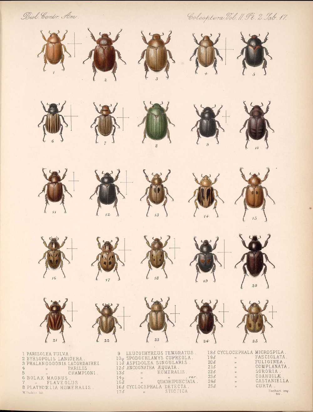 Beetles,  Image number:bca_12_02_02_467