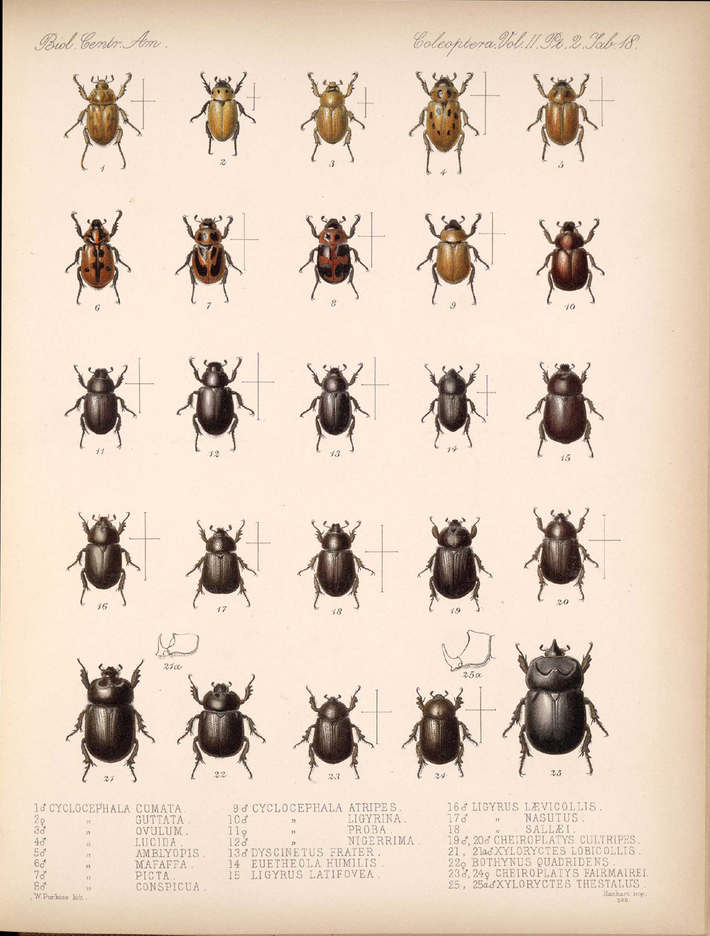 Beetles,  Image number:bca_12_02_02_468