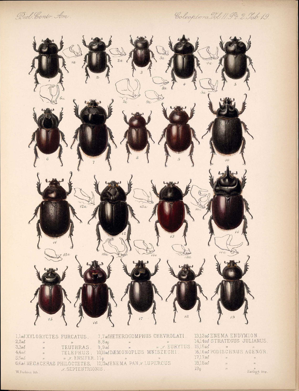 Beetles,  Image number:bca_12_02_02_469