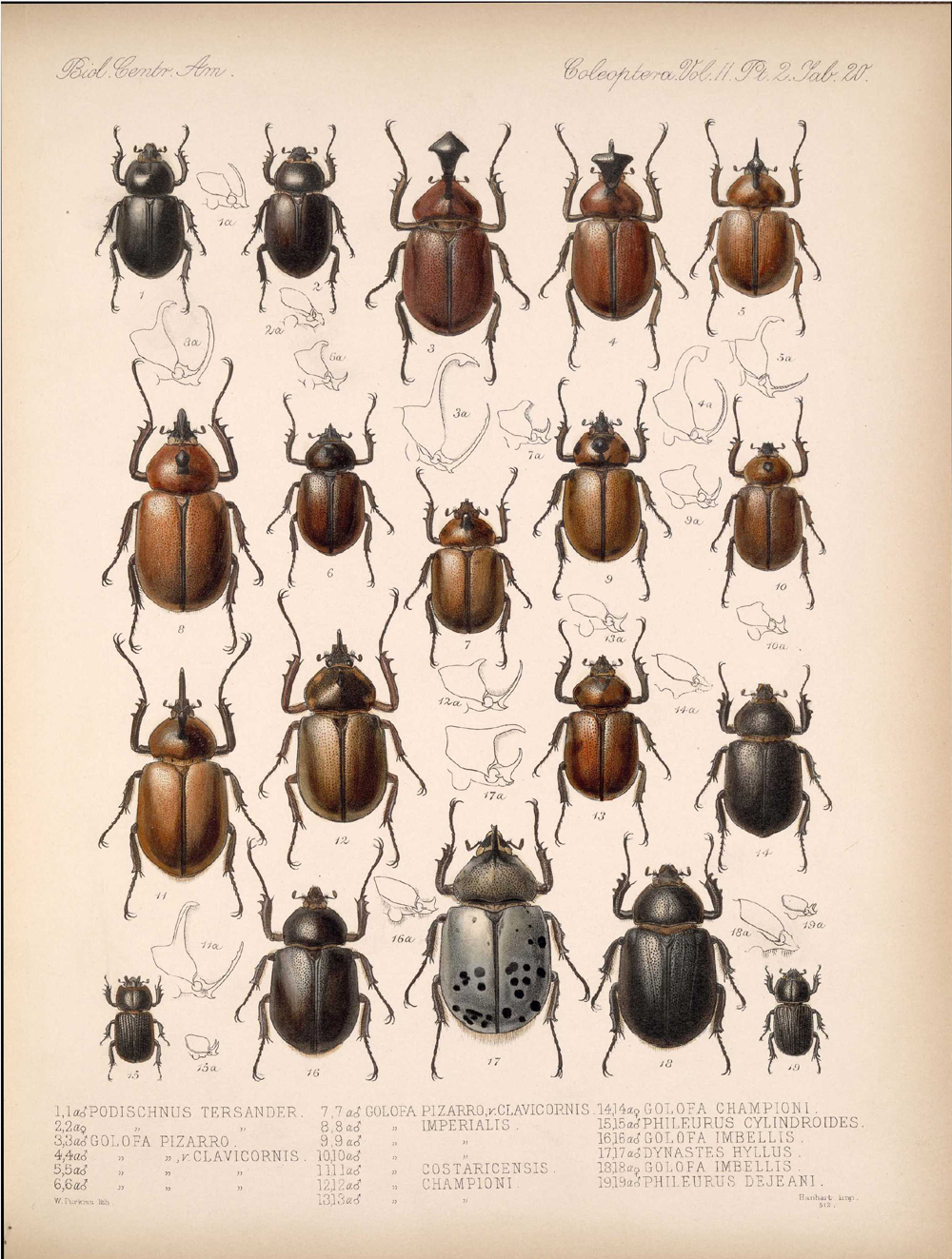 Beetles,  Image number:bca_12_02_02_470