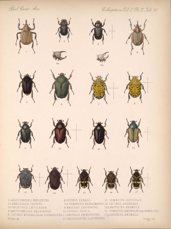 Beetles,  Image number:bca_12_02_02_471